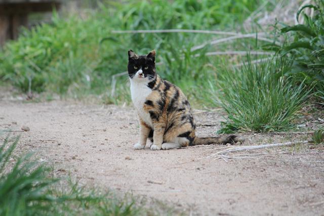 団地の野良猫