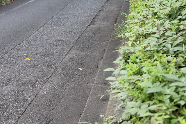 団地の前の道