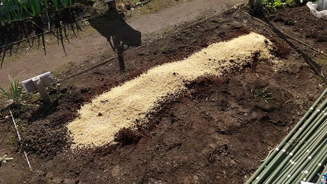 にんにく栽培の土作り